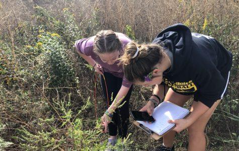 Freshmen Grace LaGognato and Sam Frato doing a prairie study during Honors Bio
