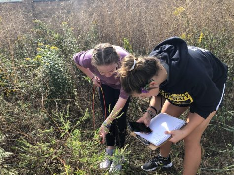 Freshmen Grace LaGognato and Sam Frato doing a prairie study during Honors Bio